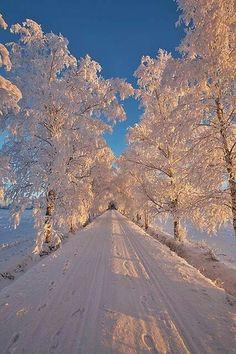 O iarnă minunata!!!!!