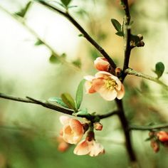 Hail to spring by lost in pixels, via Flickr