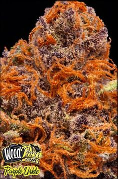 Purple Urkle Weed Strain We can totally crush this one!