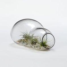 Twice Bubbled Terrarium