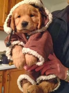 6 Adorable and funny dressed up pets, fall outfit :D
