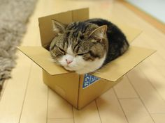love me some Maru in a box