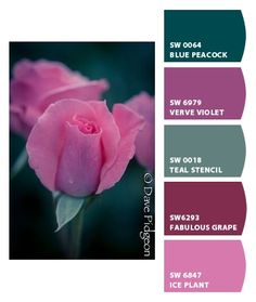 ❤ =^..^= ❤  Chip It! by Sherwin-Williams – Lakeview Park, Ohio ..... beautiful pink tea rose