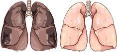 Nikotinin vücuttan atılması için 48 ila 72 saat arası bir süre gerekir. Şarap üretimi sırasında elde edilen bir yan ürün olan krem tartar nikotini vücuttan