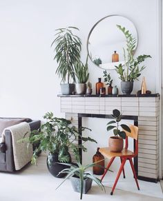 Plants in my livingroom