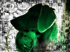Arte foto digital agudo rs 89