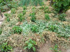 Kevés locsolással is gyönyörű kert! Art Decor, Plants, Gardening, Garten, Lawn And Garden, Plant, Planting, Yard Landscaping, Planets