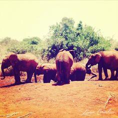 elephants lc