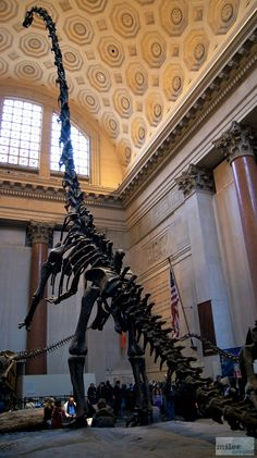 - Check more at http://www.miles-around.de/nordamerika/usa/new-york/nyc-museen-bodies-american-national-history-museum-madame-tussauds/,  #AmericanNationalHistoryMuseum #MadameTussauds #Museen #Museum #NewYork #NewYorkCity #NewYorkPass #Reisebericht #USA