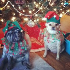 And these pets would prefer to leave the holiday hats to the elves… | Community Post: Instagram Pets That Don't Seem Enthusiastic About Christmas