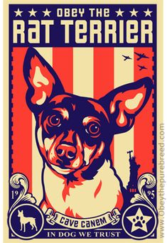 Obey the Rat Terrier! This looks A LOT like our Finnegan! He has some 'splainin' to do!