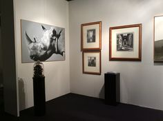 Selezione di opere esposte a Genova Antiqua 2015 presso lo stand Salamon&C. Angelo Zanella, Rhino olio su tel cm 150 x100 Andrea Barin, disegni a matita