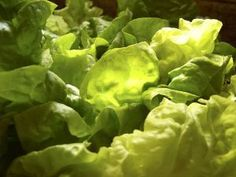 zálivky na salát Pesto, Vinaigrette, Lettuce, Salad Recipes, Salsa, Food And Drink, Vegetables, Milan, Decor