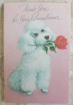 six vintage white Poodle holding a single red rose Thank You cards...too sweet!