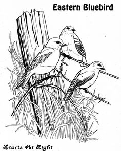 Bluebird1.jpg (1127×1409)