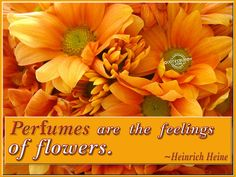 Perfumes are the feelings of flowers. Flower Quotes Life, Beautiful Flower Quotes, Beautiful Flowers, Love Me Quotes, Sign Quotes, Perfume Quotes, Heinrich Heine, Interesting Quotes, Beauty Quotes