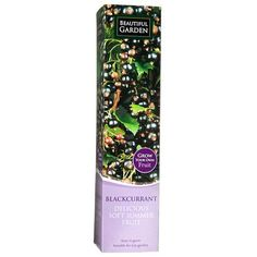 Blackcurrant Fruit Plant | Poundland