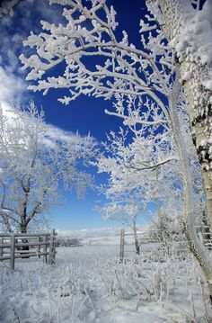 Frost is everywhere. Photo taken south of Calgary Alberta