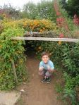 KidsInGardens: A teacher's collection of ideas and photos from children's gardens. Here: kids love tunnels! Road Trip, Children, Kids, How To Plan, Gardens, Photos, Collection, Young Children, Young Children