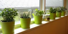 10 Window Sill Garden Ideas, Most Awesome and also Beautiful herb garden. 10 Window Sill Garden Ideas, Most Awesome and also Beautiful herb garden… Herb Garden Kit, Container Herb Garden, Herb Garden In Kitchen, Container Gardening Vegetables, Easy Garden, Garden Web, Kitchen Gardening, Indoor Vegetable Gardening, Vegetable Garden For Beginners
