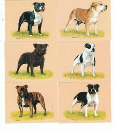 The Staffordshire Bull Terrier - Set of 6 Imperial Cards - Brand New - IDG18