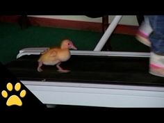 Ducks Are Awesome: Compilation