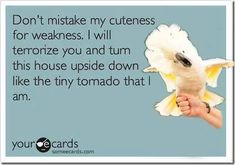 Beware of this lol parrot (e-card) :)
