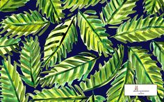 palms desktop