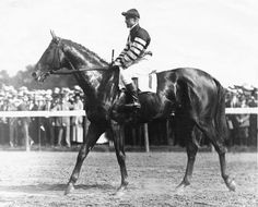 Man o' War, regarded as one of the two or three best racehorses in the history of the sport in North America, will be honored by the Kentucky Horse Park with a year-long series of events in 2017 celebrating his 100th birthday anniversary.
