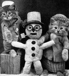 Apparently there was a guy named Harry Whittier Frees that would take horrifyingly cute picture of animals dressed up as people for children's books. These were the original cat memes before the internet even existed. Crazy Cat Lady, Crazy Cats, I Love Cats, Cool Cats, Ecole Art, Here Kitty Kitty, Kitty Cats, Vintage Cat, Pet Clothes