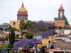 Jacaranda trees from the roof of Rosewood San Miguel de Allende http://www.moretimetotravel.com/hotel-review-rosewood-san-miguel-de-allende-rich-blend-old-new%E2%80%A8/