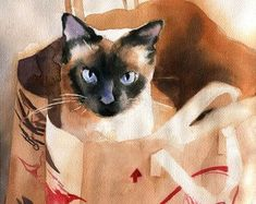 Tonkinese Tonk Siamese cat Art Print of a watercolor Painting Big Large Huge Girls Cat Lover Gift Blue Mink Point Applehead Traditional - Aquarelllmalerei Watercolor Cat, Watercolor Animals, Watercolor Paintings, I Love Cats, Crazy Cats, Cute Cats, Siamese Cats, Cats And Kittens, Ragdoll Cats