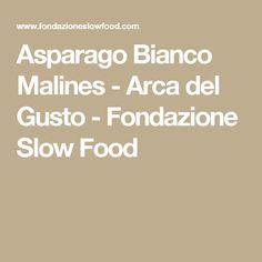Asparago Bianco Malines - Arca del Gusto - Fondazione Slow Food