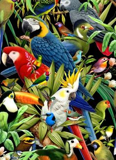 Multiple parrot species: African Grey, Blue and Gold Macaw, Scarlet Macaw, Sulfur Crested Cockatoo, and a Toucan.: