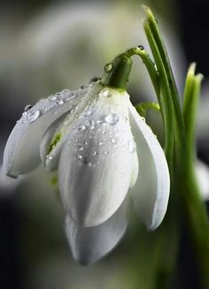 Find beauty everywhere My Flower, Flower Power, White Flowers, Beautiful Flowers, Lily Of The Valley, Ikebana, Daffodils, Belle Photo, Spring Flowers