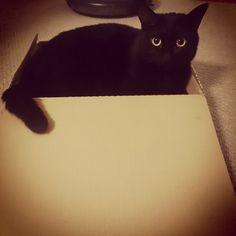 #cat #catstagram #blackcat #boxcat #ねこ部 #ねこ #くろねこ #黒猫 #黒猫同盟 #箱ねこ #入らずにいられない