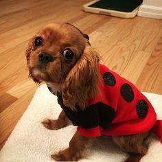How about a little lady bug on a rug to cheer you up today? 🐶🐞