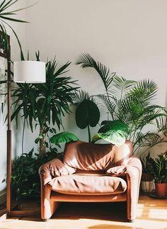 """Nous sommes totalement """"fana"""" des plantes ! Au plus il y en a, au mieux c'est et au plus il y en a, au plus on en veut ! Les plantes dans nos intérieurs."""