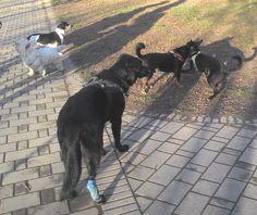 19/02/2016 - Torino con Lea, Peja, Zorba e Nina