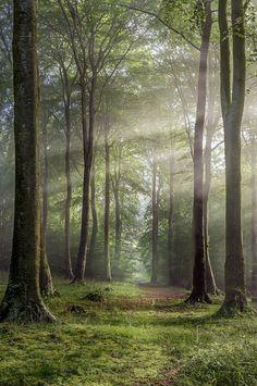 Buckholt Wood, Cranham, Gloucestershire, England, shot by Rob Wolstenholme...