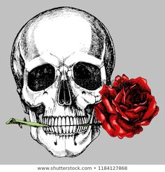 Human skull with a rose in the teeth. Hand-drawn vector anatomical illustration for your romantic or gothic design. Skull Anatomy, Skeleton Anatomy, Skeleton Art, Anatomy Art, Human Skull, Human Art, Teeth Drawing, Skull Pictures, Day Of The Dead Art