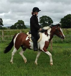 Leo - Welsh X 13.1hh Pony http://www.equineclassifieds.co.uk/Horse/welsh-x-131hh-pony-listing-238.aspx#.UlL7xVMyCSo