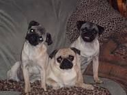 Bugsy, Bentley, and Bailey
