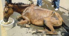 De ne pas réduire les peines pour cruauté envers les animaux
