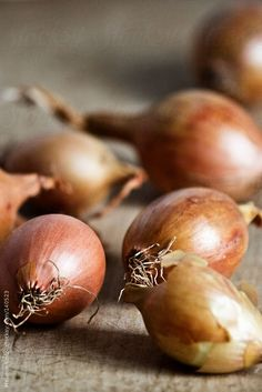 Onions by Mellimage - Melanie Kintz | Stocksy United