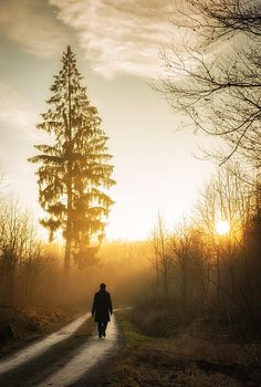 Warm and beautiful evening light, sunset is waiting. A person is walking on a forest path, beautiful tree in the background. Lovely landscape in nature park Schoenbuch (Naturpark Schönbuch) Germany. Available as poster, fine art print or canvas print: http://matthias-hauser.artistwebsites.com/featured/forest-path-into-the-warm-orange-sunset-matthias-hauser.html 30 days money back guarantee. (c) Matthias Hauser hauserfoto.com