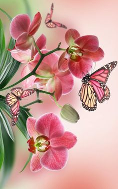 58 best Butterfly Iphone Wallpaper pictures in the best available resolution. Butterfly Drawing, Butterfly Flowers, Beautiful Butterflies, Flower Art, Beautiful Flowers, Pink Flowers, Orchid Wallpaper, Butterfly Wallpaper, Wallpaper Backgrounds