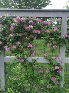 """Adrian Higgins on Twitter: """"Lovely. Clematis Purple Dream.… """" Clematis, Gardens, Outdoors, Outdoor Structures, Purple, Twitter, Plants, Outdoor Gardens, Plant"""
