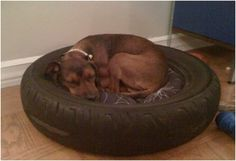 Mr. Bruno needs this.... maybe he won't chew it?!?!?  Top 10 DIY Projects For Old Car Tires
