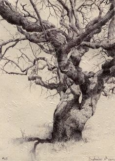 Por amor al arte: Dina Brodsky Ballpoint Pen Drawing, Ink Pen Drawings, Landscape Drawings, Landscape Paintings, Drawing Landscapes Pencil, Tree Study, Tree Sketches, Anatomy Drawing, Art Graphique